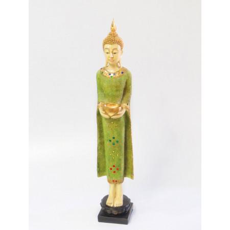 Buda gde poly verde alto 72...